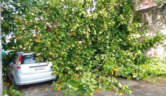 Árvore caiu por volta das 6h da manhã - Foto: Edilson Lima | Ag. A TARDE