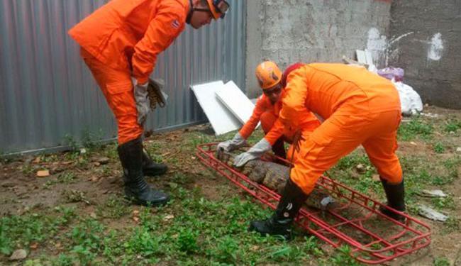 A remoção foi acompanhada por técnicos do Instituto do Meio Ambiente e Recursos Hídricos - Foto: Reprodução | Andrea Trindade | Acorda Cidade