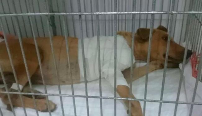 Cachorro é mascote de UPP no Rio de Janeiro - Foto: Divulgação