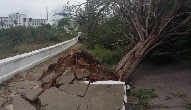Árvores caíram em diferentes pontos do município - Foto: Reprodução | Site arildoleone.com