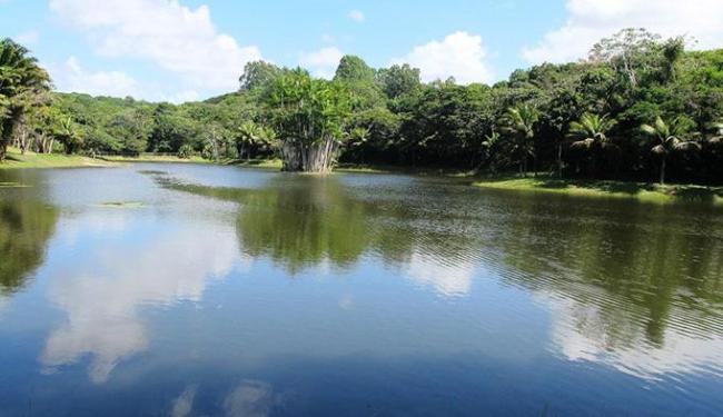 O Eco Parque Sauípe protege uma região de transição de dois ecossistemas do bioma Mata Atlântica - Foto: Divulgaçãp