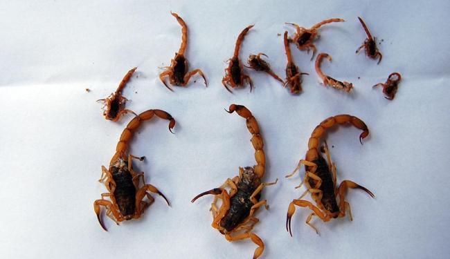 Altas temperaturas favorecem o processo reprodutivo de insetos e aracnídeos - Foto: Arquivo | Ag. A TARDE | 4.2.2011
