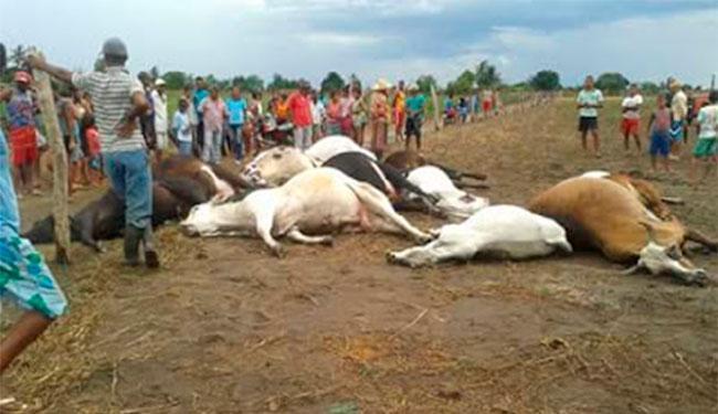 Ao todo, 17 animais morreram atingidos pelo raio, sendo 15 cabeças de gado - Foto: Reprodução | Blog Augusto Urgente