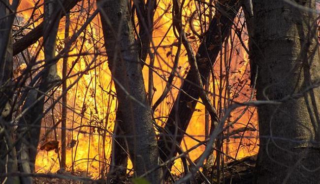 Fogo na região do município de Barreiras, em setembro passado - Foto: Miriam Hermes l Ag. A TARDE l 04.09.2015