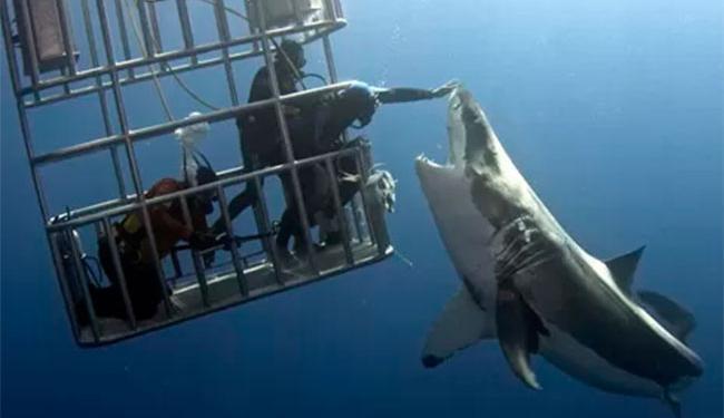 Mergulhador saiu ileso de brincadeira perigosa - Foto: Reprodução | Facebook