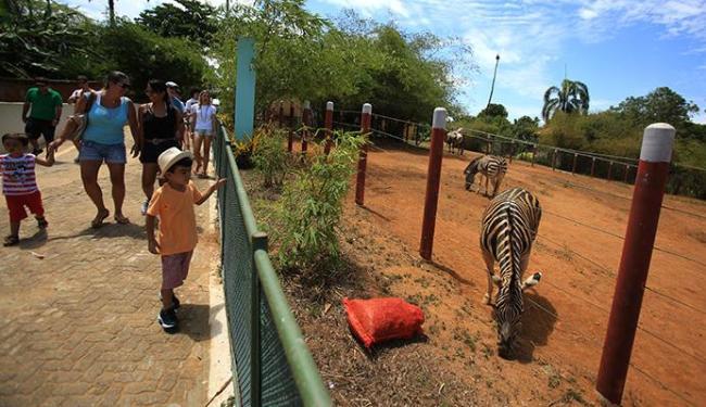 Zoológico de Salvador oferece atividades que combinam lazer e conhecimento - Foto: Joá Souza | Ag. A TARDE