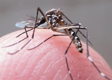 Mosquito Aedes - Foto: Rafael Neddermeyer | Públicas