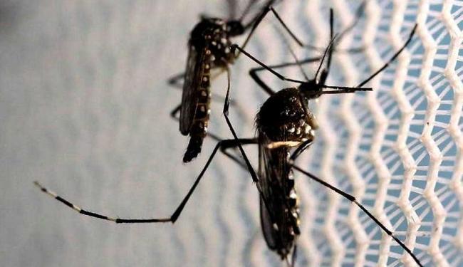 Zika é transmitida pelo mosquito Aedes Aegypti - Foto: Paulo Whitaker   Reuters
