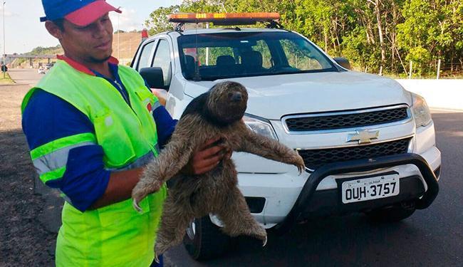 Após avaliação veterinária, o animal foi levado à mata nativa - Foto: Divulgação | Concessionária Bahia Norte