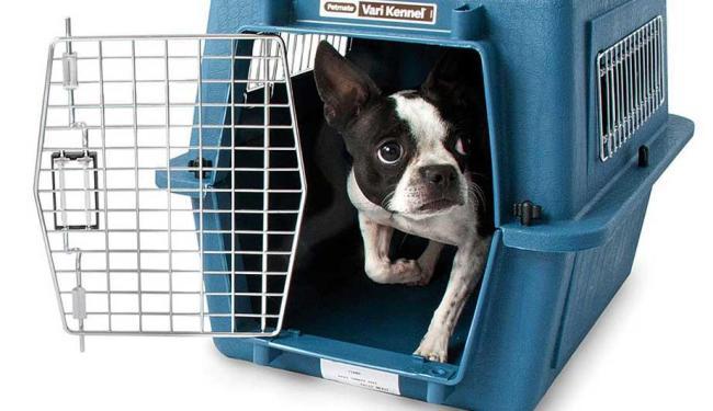 Animal deve ser transportado em contêiner de fibra - Foto: DIvulgação