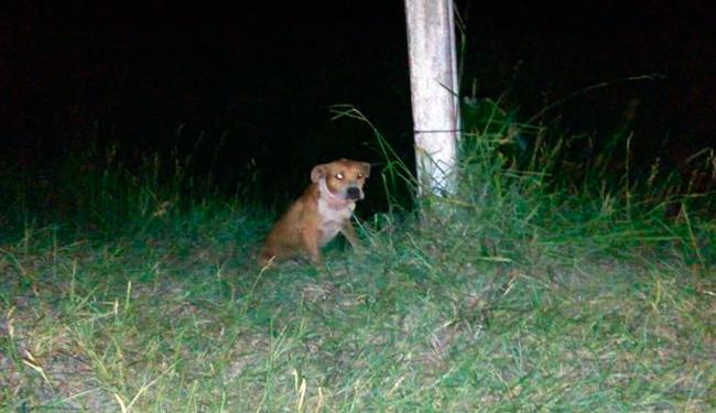 Alguns moradores amarraram o animal depois do ataque - Foto: Reprodução | Site Radar830