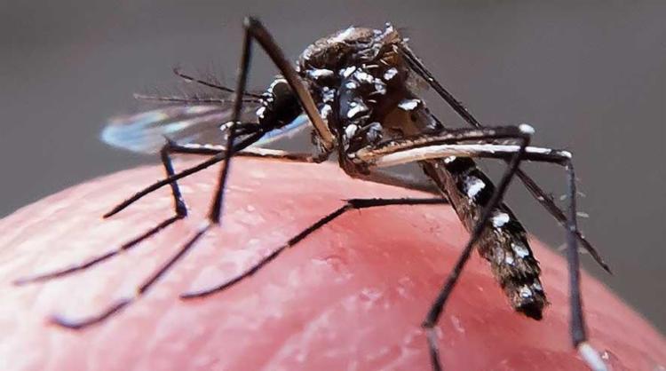 Até agora, 27 casos de chikungunya foram confirmados pela SMS - Foto: Rafael Neddermeyer | Fotos Públicas