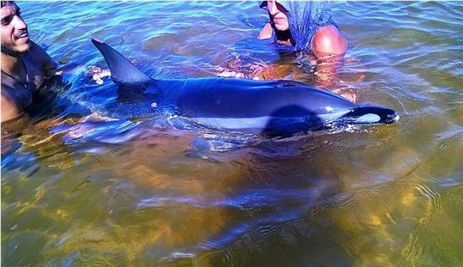 Animal encalhou na terça-feira, 15, e na quarta-feira, 16 - Foto: Inema | Divulgação