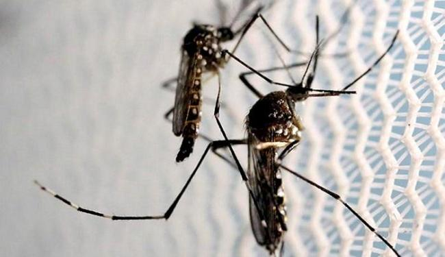 Mmosquito Aedes aegypti é o transmissor do vírus - Foto: Paulo Whitaker l Reuters
