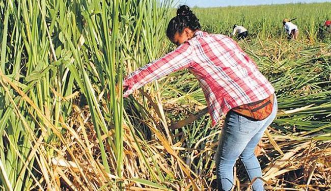 Grupo de mulheres Movimento dos Trabalhadores Rurais Sem-Terra ocupa fazenda no sul da Bahia - Foto: Divulgação | MST