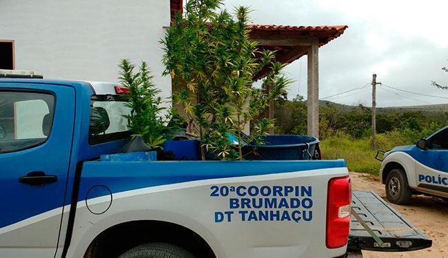 A ação faz parte das investigações para combater o tráfico de drogas em Ibicoara - Foto: Divulgação | Polícia Civil