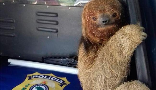 O animal foi encaminhado para o INEMA de Jequié - Foto: Reprodução | Facebook