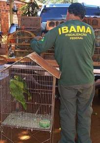 Operação resgata cerca de 900 animais silvestres na Bahia - Foto: PRF | Divulgação