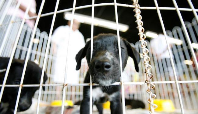 Animais recolhidos na rua foram cuidados para ganhar novo lar - Foto: Adilton Venegeroles | Ag. A TARDE