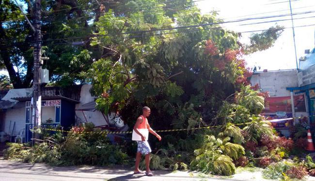 Área no Pau Miúdo foi isolada para retirada do galho - Foto: Edilson Lima   Ag. A TARDE