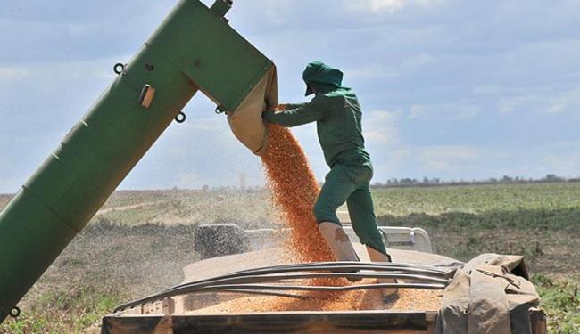 Segundo a Aiba, produtividade do milho caiu cerca de 30% - Foto: Erik Salles l Ag. Servphoto