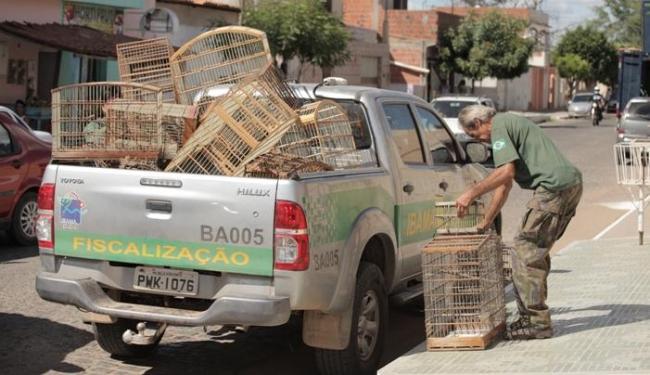 Órgão de fiscalização apreendeu animais silvestres - Foto: Divulgação