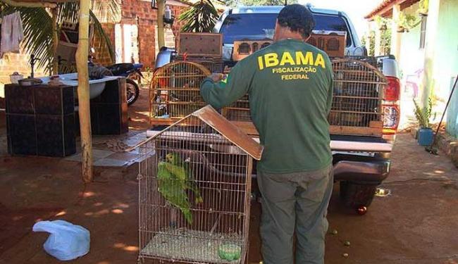 Operação da PRF e Ibama aconteceu entre os dias 21 e 29 de abril - Foto: PRF | Divulgação