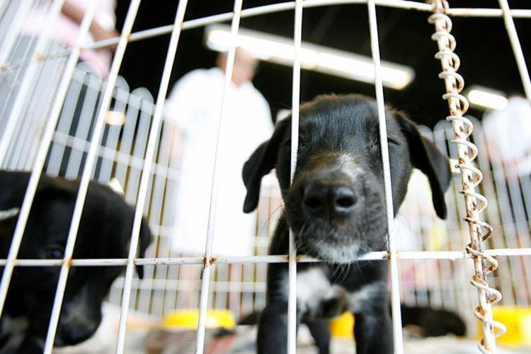 É possível adotar cães e gatos de raças variadas - Foto: Adilton Venegeroles | Ag. A TARDE