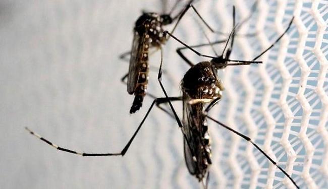 Mosquito Aedes aegypti é o transmissor do vírus - Foto: Paulo Whitaker l Reuters