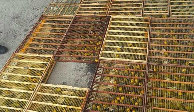 Foram encontrados 15 filhotes mortos - Foto: PRF | Divulgação