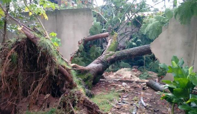 Árvore caiu em muro na manhã desta quarta - Foto: Luciano da Matta | Ag. A TARDE