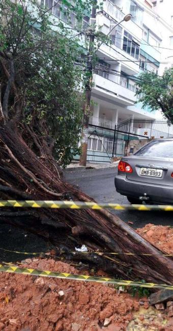 Árvore atingiu a grade de um condomínio na Barra - Foto: Transalvador   Divulgação