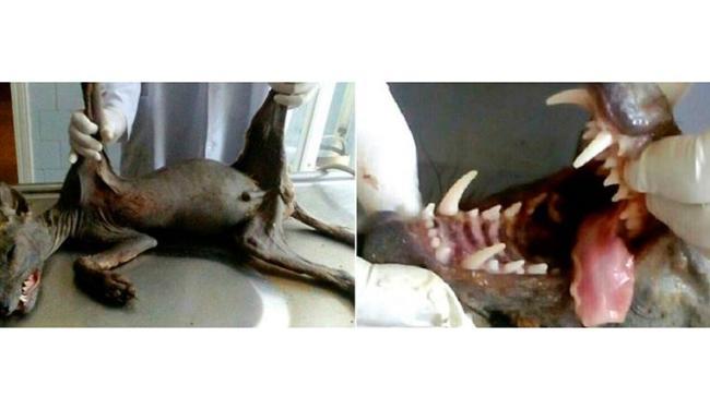 Animal seria responsável pela morte de galinhas e outros pequenos animais - Foto: Reprodução   Twitter