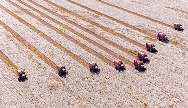 Certificação vai agregar valor a frutas, leite, café, algodão e aves produzidos na Bahia - Foto: Rui Rezende l Divulgação
