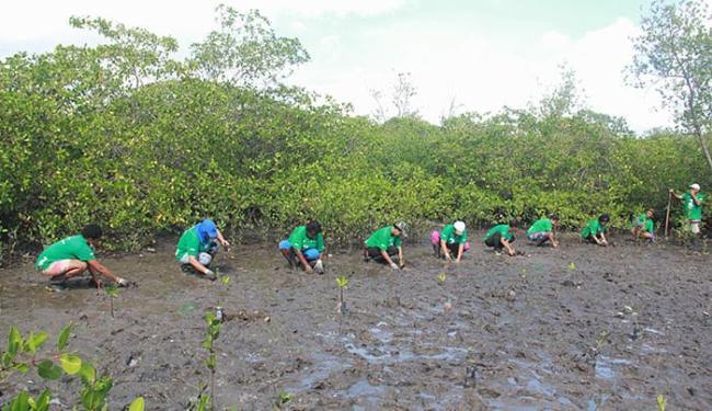 Equipe fez o plantio de 1 mil mudas das três espécies encontradas na região: mangue branco, vermelho - Foto: Carlos Gomes l Divulgação