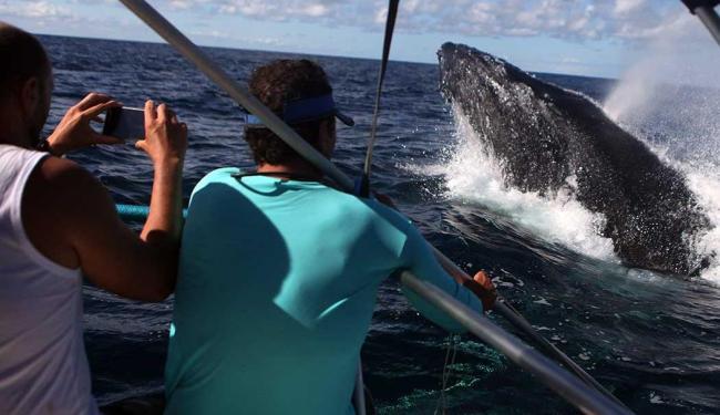 O curso é para mestre de embarcação e operadores de turismo de observação - Foto: Lúcio Távora   Ag. A TARDE   Arquivo