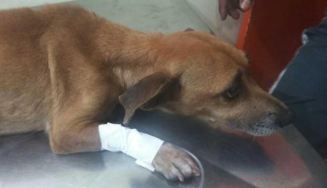 Animal foi achado por PMs no Alto do Abaeté - Foto: Divulgação | PM
