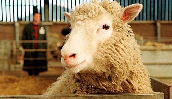 O legado deixado pela ovelha mais famosa do mundo para a ciência é enorme - Foto: Paul Clements | AP