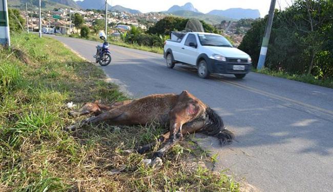 Imagens de animal amarrado e arrastado por veículo foram divulgadas na internet - Foto: Estêvão Silva l guarananet.com