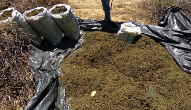 260 kg de maconha pronta para consumo foram incinerados - Foto: Divulgação | PM-BA