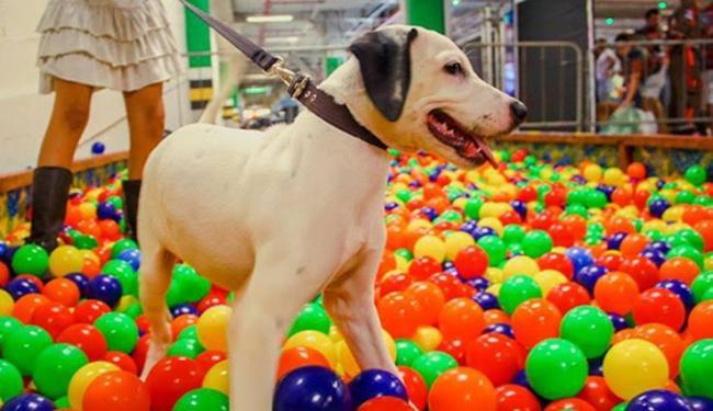 Os cães terão espaço para atividades recreativas - Foto: Divulgação