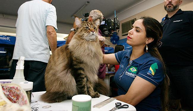 Exposição reúne cerca de 120 gatos de 12 espécies - Foto: Raul Spinassé l Ag. A TARDE
