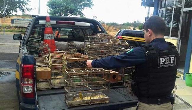 Aves foram encontradas em cativeiro - Foto: Divulgação | PRF