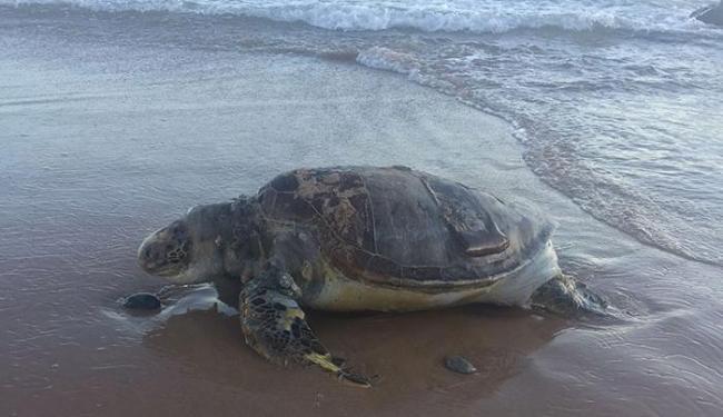 O animal foi encontrado morto no final da tarde desta quinta - Foto: Aline Galvão | Cidadão Repórter