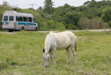 Animais na pista é a 2ª maior causa de acidentes