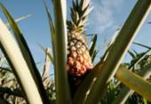 Laranja e abacaxi são os que mais desencadeiam intoxicação por agrotóxico | Foto:
