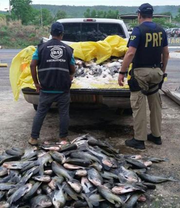 O pescado seria vendido para restaurantes em Barreiras - Foto: Reprodução | PRF