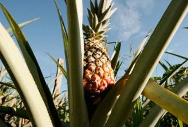 Laranja e abacaxi são os que mais desencadeiam intoxicação por agrotóxico |
