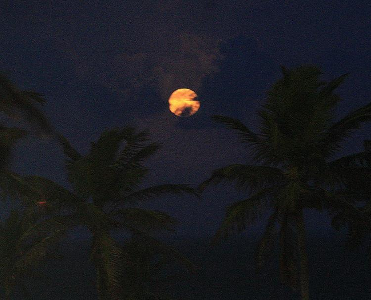 Superlua ganha o céu entre coqueiros do Jardim de Alah - Foto: Margarida Neide l Ag. A TARDE