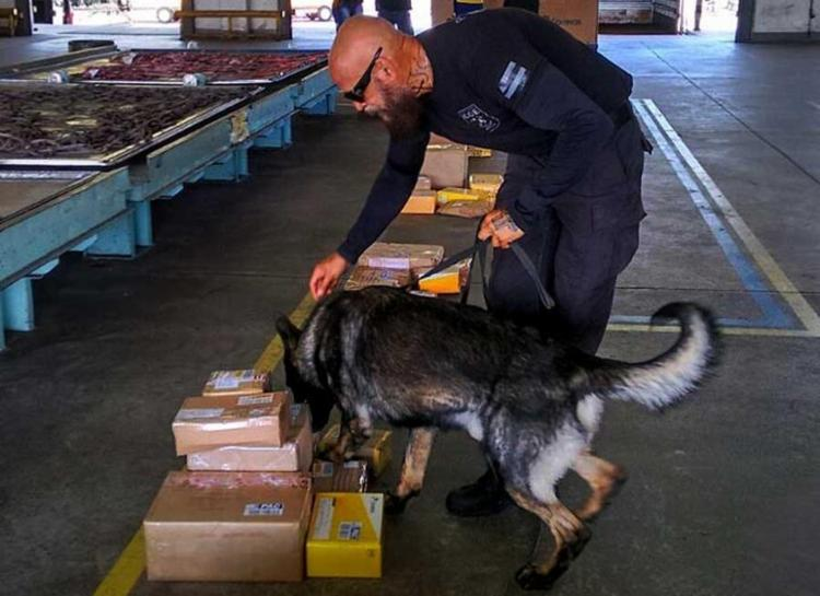 Cães foram usado para identificar as drogas - Foto: Ascom   Polícia Civil